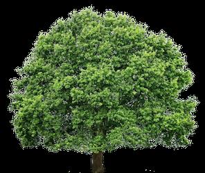 tree service