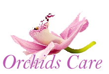 Care Homes Doncaster